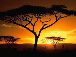 Работа гида в Африке